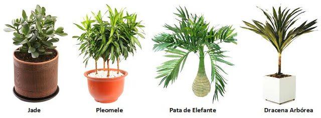 PLANTAS INDICADAS PARA AMBIENTES FECHADOS